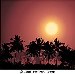 tropical, ocaso, palmera, silhouet
