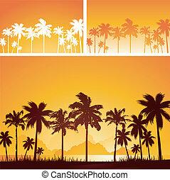 tropical, ocaso, plano de fondo