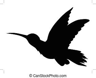 tropical, pájaro, Colibrí