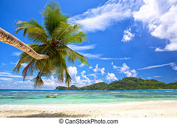 Tropical palm beach - Beautiful palm beach in Mahe Island,...