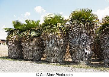 Tropical palm bush.