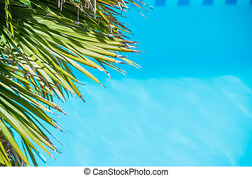 Tropical palm leaf on blue background. Top view. big tropical leaf under sunlight. Summer vacation background with coconut tree leaves and clear blue water. Copy space.