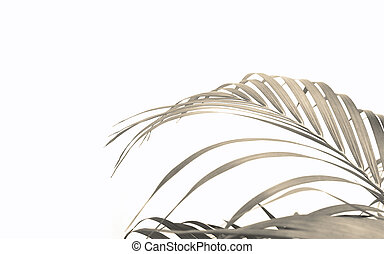 tropical palm leaf on white wall background