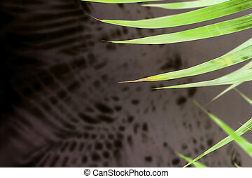 tropical palm leaf shadow on white wall background