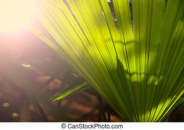Tropical palm leave in a botanical garden
