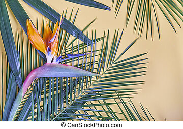 Tropical palm leaves and bird of paradise flower on pastel background.