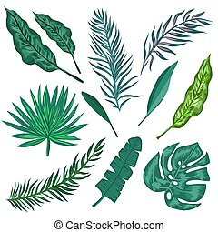 Tropical palm leaves and jungle leaves. Set of vector trendy...
