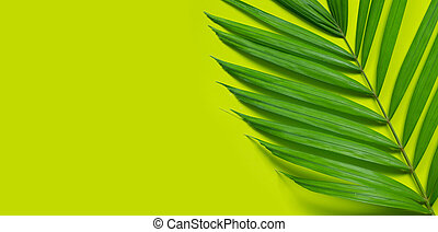 Tropical palm leaves on green background.