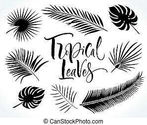 Tropical Palm Leaves Silhouettes