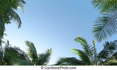 Tropical Palm Leaves Swaying against a Clear Blue Sky