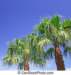 palm on background of blue sky