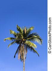 Tropical palm tree at Nusa Penida at Bali island, Indonesia