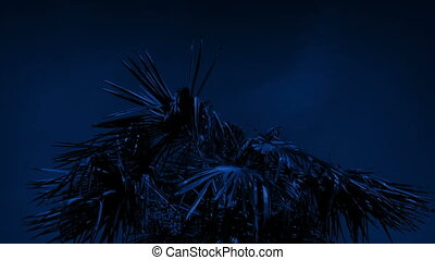 Tropical Palm Tree In Strong Winds At Night - Palm tree...