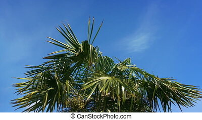 Tropical Palm Tree In Strong Winds - Palm tree sways on...