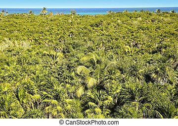 tropical palm tree jungle Sian Kaan Tulum - tropical palm...