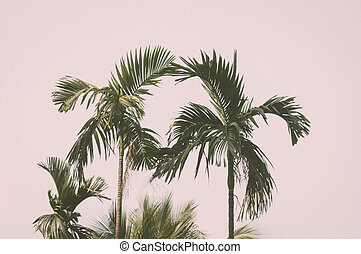 Tropical palm tree on sunset sky and cloud abstract background.