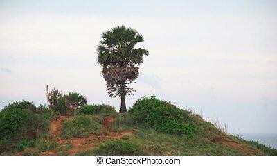 tropical palm tree on the hill of the island. sea coast