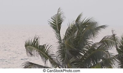 Tropical Palm Tree over a Gray Sea, with Sound - Leaves and...