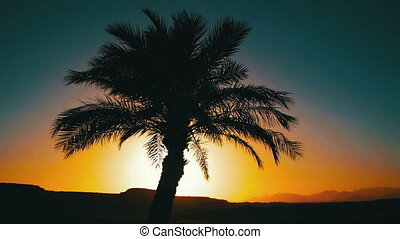 Tropical Palm Tree Silhouette on Sunset Background, and Outlines of the Mountains