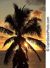 Tropical Palm Tree Sunset, Maui