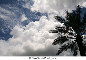 Tropical Palm Tree with Sky