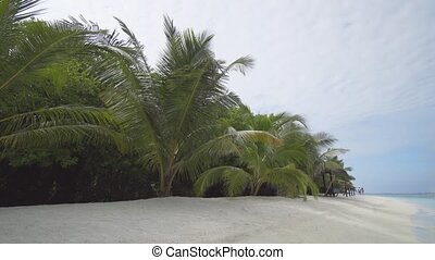 Tropical Palm Trees along White Sand Beach, with Sound -...
