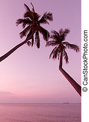 Tropical palm trees and sea on sunset