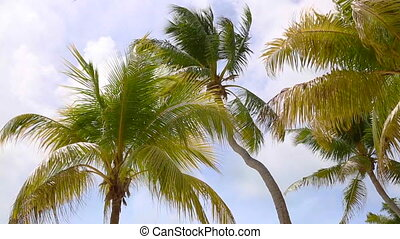 Tropical palm trees in the wind