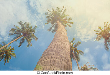 Tropical Palm trees lit by sunshine - vintage