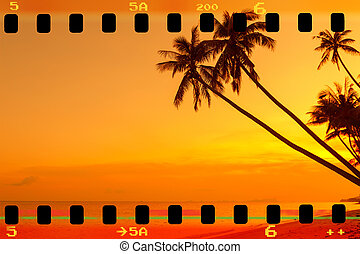 Tropical palm trees on beach