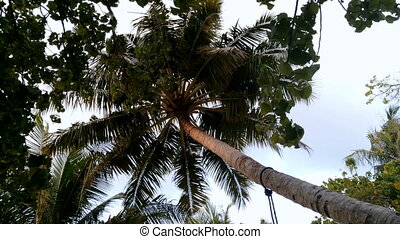 Tropical palm trees on sky background.