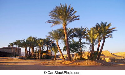 Tropical Palm Trees on Sky Background in Desert