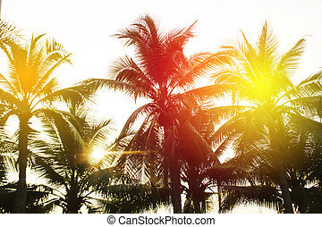 tropical palm trees on sky background