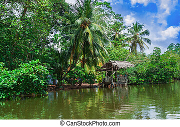 Tropical palm trees on the river bank.