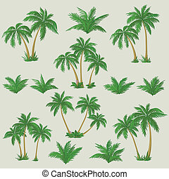Tropical palm trees set - Set tropical palm trees with green...