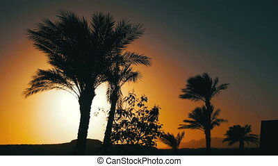Tropical Palm Trees Silhouette on Sunset Background, and Outlines of the Mountains