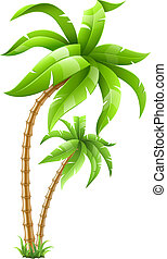 two tropical palms isolated on white background. Vector illustration. EPS10. Transparent objects used for shadows and lights drawing.