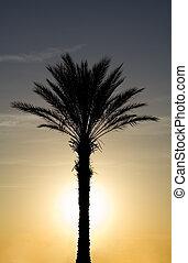 tropical, palmera, con, sistema del sol