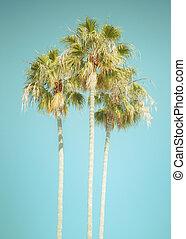 tropical, palmera