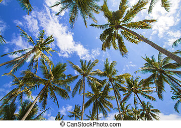 Beautiful Palm Trees on the Tropical Island.