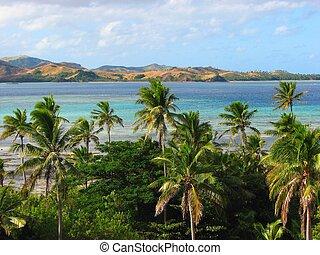 Tropical palms in Nacula island, Yasawa Islands, Fiji
