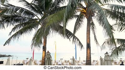 Tropical palms on beach - Amazing exotic palms growing on...