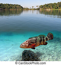 Tropical paradise and giant grouper, Koh Cahg island,...