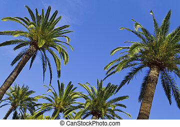 Tropical Paradise - Palm trees rise into a perfect blue sky...