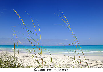 Tropical paradise - View of tropical beach with vegetation ...