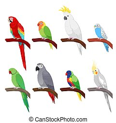 Tropical Parrot Set Isolated on White Background. Vector...