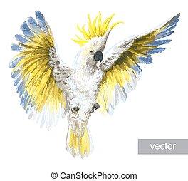 Tropical parrots Crested Cockatoo - Tropical birds, parrots....