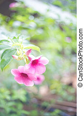 tropical pink flowers on a green blurred background. selective focus