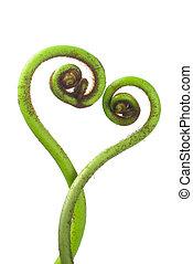 tropical plant - fern