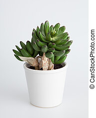 Plant in a white pot